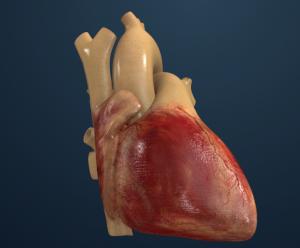 HeartModel